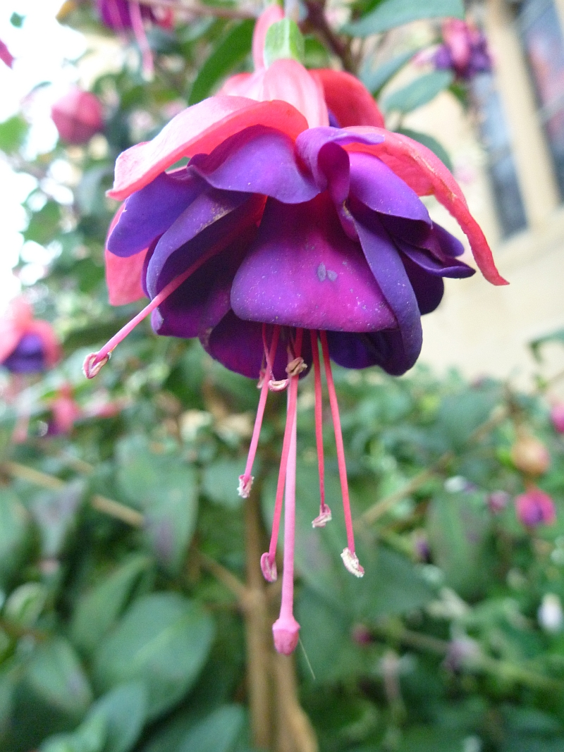 Blüten Macro